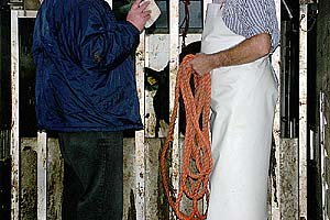 soylent-network - Rind Kuh Schlachtung Bolzenschuss Fotos Bilder